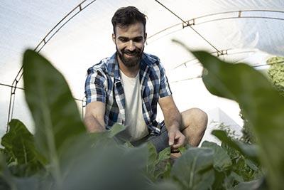 Kredyt obrotowy na finansowanie bieżącej działalności rolniczej